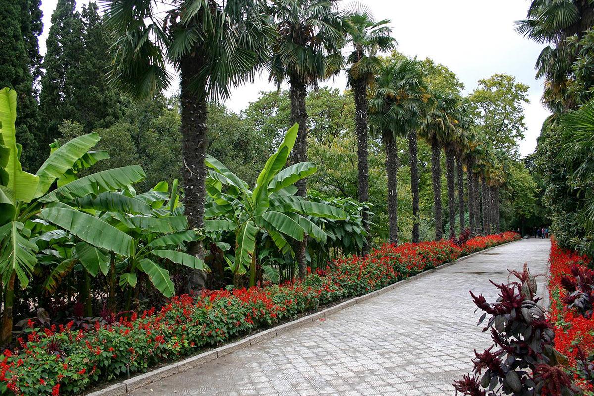 никитинский ботанический сад в ялте фото хороший рецепт